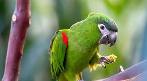 How much does a Macaw Cost – Updated Macaws Price in 2019